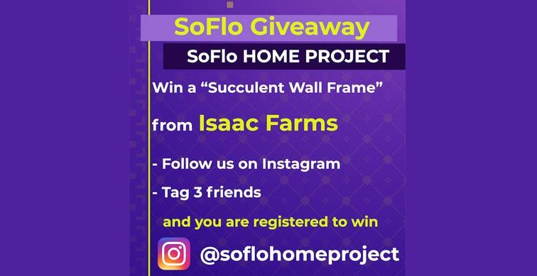 Local 10 SoFlo Home Project Succulent Wall Frame Contest