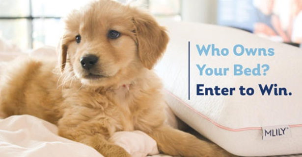 MLILY National Pet Day Giveaway