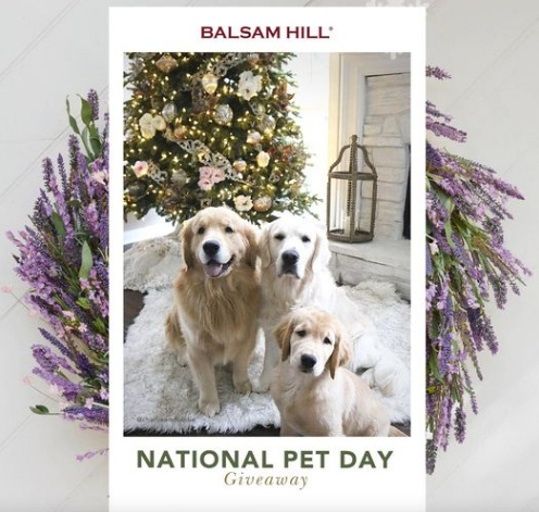 Balsam Hill Pet Day Giveaway